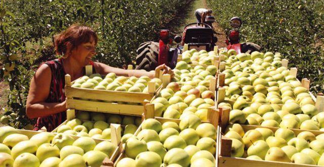 Rusija traži pojašnjenje od BiH: Objasnite odakle vam 100 puta više jabuka