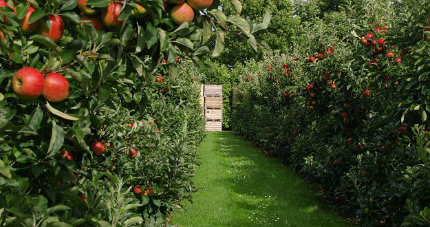 Teslićki proizvođači voća na trećem savjetovanju voćara RS u Gradišci