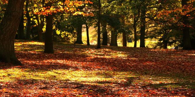 Oko 10.30 počinju jesen i proljeće