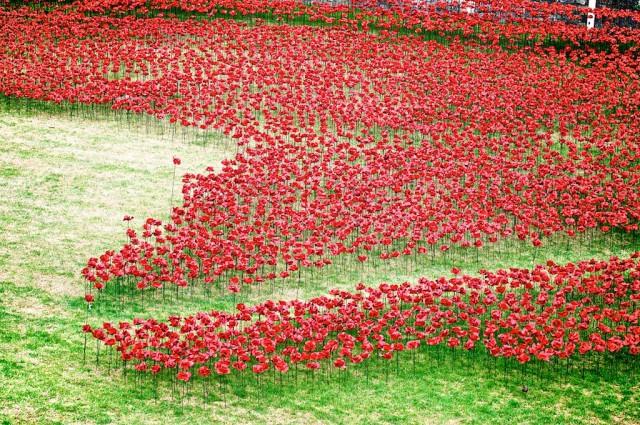 poppies-wwii-wcht06-640x425