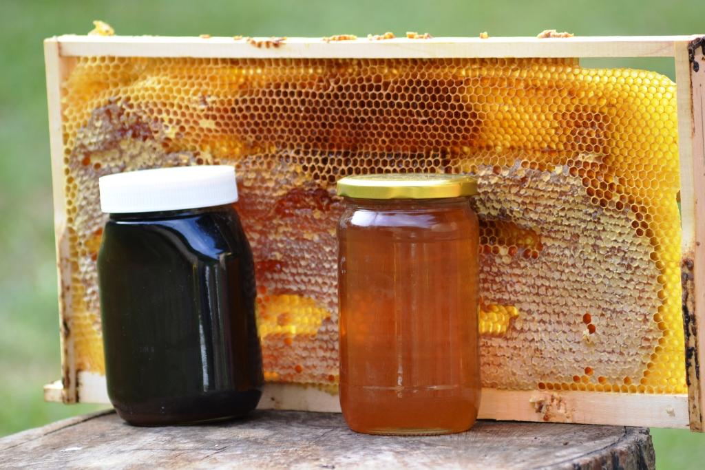 Oglas – Prodajem domaći med